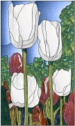 stained white and red tulips